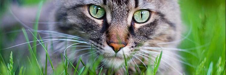 El gato, cuidados,mantinimiento e higiene