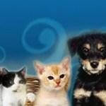 Un animal de compañía o mascota es un animal doméstico
